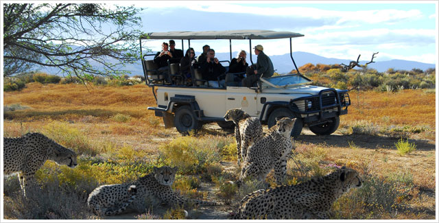 Day safari at Inverdoorn Game Reserve