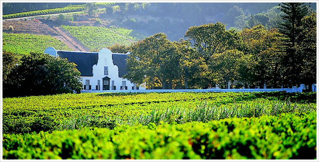 Cape Wineland